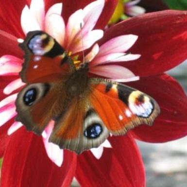 Umgebung | Schmetterling